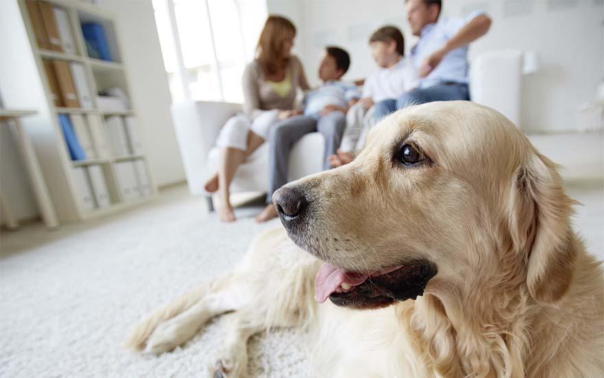 família desfocada ao fundo e cachorro de cor clara na frente, olhando para o lado